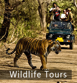 wildlife-tours from Delhi